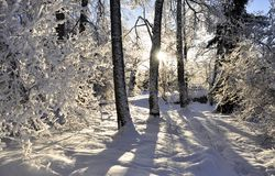 Wintry dream Royalty Free Stock Photos