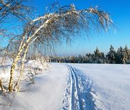 Wintry evening view cross country skiing way with. Ribbon tree Stock Image