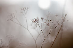 Wintry fog Stock Photos