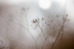 Wintry fog Stock Photos