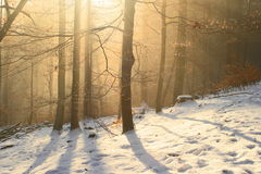 Wintry forest Stock Image