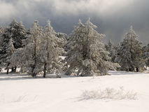 Wintry forest Stock Images