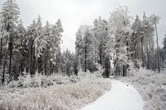 Wintry forest. Shot of a wintry forest stock image