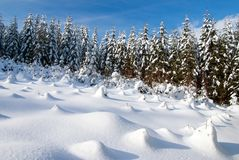 Wintry forest Royalty Free Stock Images