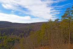 Wintry forest on black hills against blue cloudy sky. Stock Photos