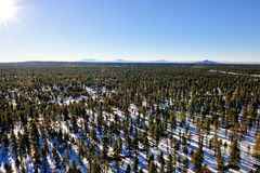 Wintry forest landscape Royalty Free Stock Photos