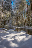Wintry forest, Martins Fork River, Kentucky Royalty Free Stock Image