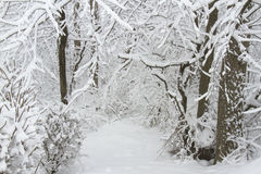 Wintry Forest Path. Scene into a forest lane after a heavy, wet wintry snowfall Stock Photo