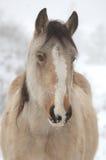 wintry häst Arkivbilder
