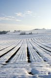 Wintry landscape. With frozen field Royalty Free Stock Photos