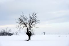 Wintry landscape. With bare trees and farm Royalty Free Stock Photography