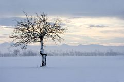 Wintry landscape. With alone tree Royalty Free Stock Images