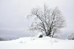 Wintry landscape Stock Photos
