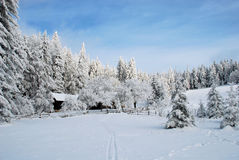 Wintry Landscape. The beautiful wintry landscape in Austria Royalty Free Stock Photography
