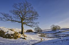 Wintry Landscape. A view of a beautiful wintry landscape in England Stock Photos