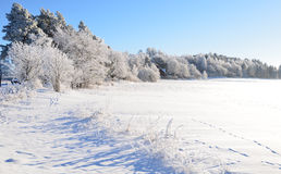 Wintry landscape. And frosty branch Royalty Free Stock Images