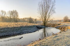 Wintry landscape in early morning sunlight. Picturesque rural winter landscape with a thin layer of snow and hoarfrost and a stream with a swimming couple of Royalty Free Stock Photo