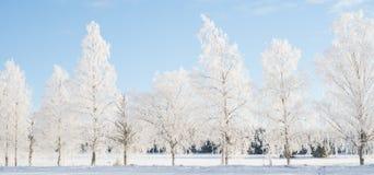 Wintry landscape Stock Image