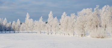 Wintry landscape Stock Photos