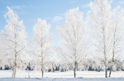 Wintry landscape Stock Images