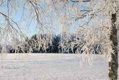 Wintry landscape Royalty Free Stock Photos