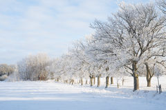 Wintry landscape Royalty Free Stock Photo