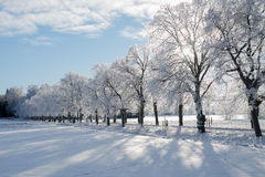 Wintry landscape. And frosty branch Royalty Free Stock Image