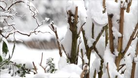 Wintry landscape, snow on tree branches stock footage