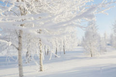 Wintry landscape with snowy trees. Royalty Free Stock Photo