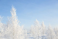 Wintry landscape with snowy trees. Stock Image