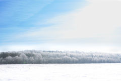 Wintry landscape with snowy trees. Royalty Free Stock Image