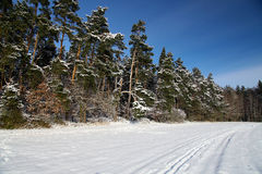 Wintry landscape with snowy trees Royalty Free Stock Image