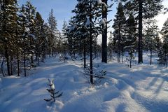 Wintry landscape in Swedish Lapland royalty free stock image