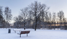 Wintry park. At Finlands at cold day Stock Image