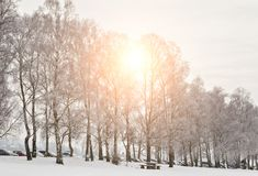 Wintry park landscape. Wintry landscape in park. Hassleholm, Sweden Stock Images