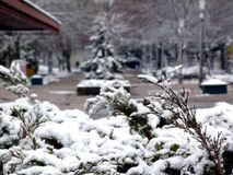 Wintry park with snow covered shrubs and evergreens stock images