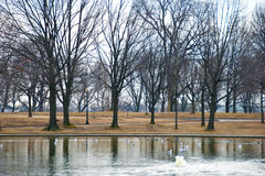 Wintry Park in Washington, D.C. Royalty Free Stock Photography