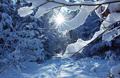 Wintry path in the forest with bright sunshine Royalty Free Stock Images