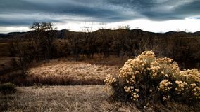 Wintry rabbitbush and cattails stock photography