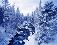Wintry River Landscape. Snow covered pines line a flowing riverbed with rocks covered in snow and a wintry sky above Stock Photo