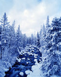 Wintry River Landscape. Snow covered pines line a flowing riverbed with rocks covered in snow and a wintry sky above stock photos