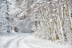 Wintry road through birch forest. Cowered with snow Stock Image