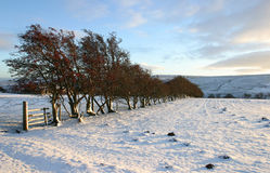 Wintry Scene. Snow covered fields with hedge stock photo