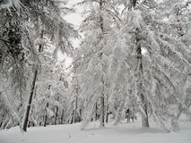 Wintry scene of an ice covered Royalty Free Stock Image