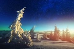 Wintry scene with snowy trees. Fantastic winter landscape glowing by star light. Dramatic wintry scene with snowy trees and milky way in night sky. Carpathians royalty free stock photos