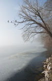 Wintry scenery with fog at the lake Stock Images