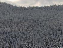 wintry skog Arkivbild
