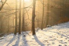 wintry skog Fotografering för Bildbyråer