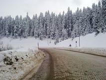 wintry skogväg Arkivfoto