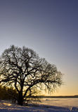 Wintry sunset, tree and ice covered lake Royalty Free Stock Image